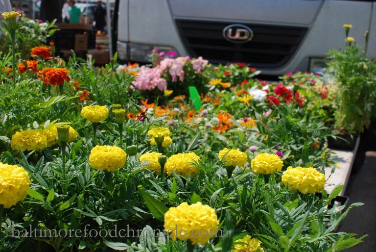 Waverly Market 07